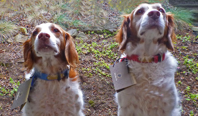 Saute2000 Bowwowscotti taste testers for our dog treats
